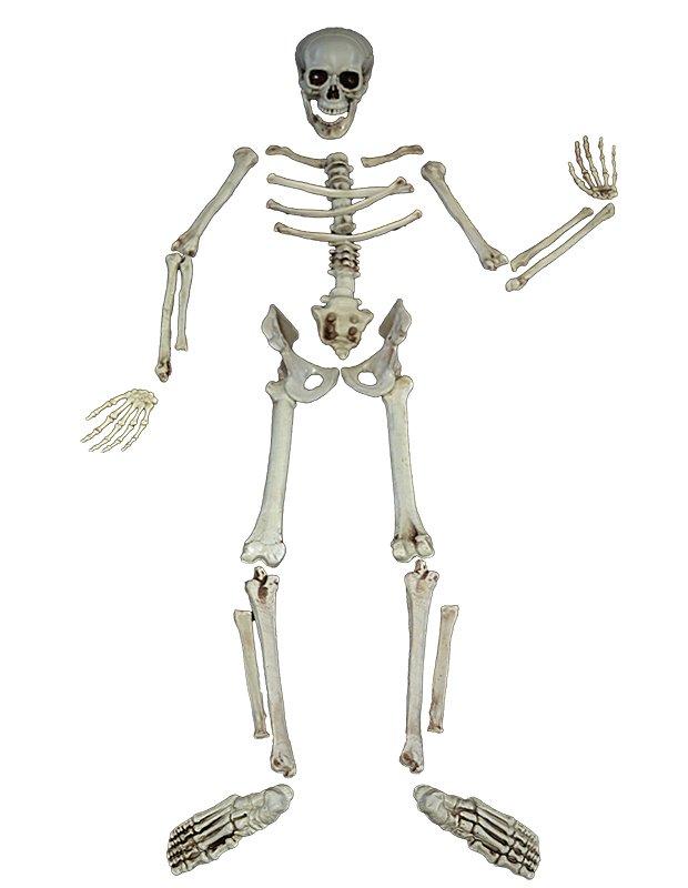 картинки кости и сони два