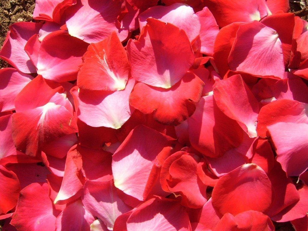 Картинки из лепестков красных роз